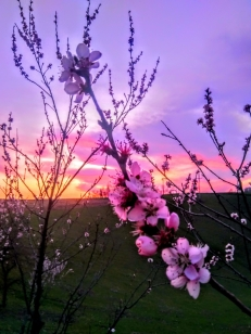 Nikola Savanović - Zalazak Sunca u proljeće
