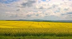 Siniša Marčić - Žuto kao Sunce